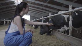Ung positiv kvinnlig arbetare på kolantgården som försöker att mata däggdjuret vid handen Den åkerbruka branschen som brukar och lager videofilmer