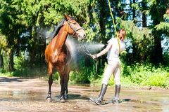Ung rid- tvagning för tonårs- flicka hennes bruna häst i dusch Royaltyfri Bild