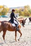Ung ridninghäst för tonårs- flicka silhouettes rid- hästhästar för dressage som hoppar poloryttare, sportvektorn Arkivbild