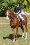 Ung ridninghäst för tonårs- flicka silhouettes rid- hästhästar för dressage som hoppar poloryttare, sportvektorn Royaltyfri Foto