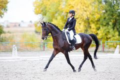 Ung ryttarekvinna på häst på dressyrkonkurrens Royaltyfri Foto