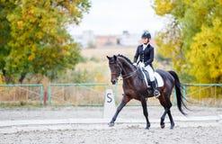 Ung ryttarekvinna på häst på dressyrkonkurrens Arkivbild