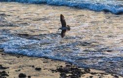 Ung seagull i frukost arkivfoto
