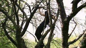 Ung sexig dansarekvinnadans på trädet stock video