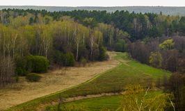 Ung skogäng Vår i mellersta Ryssland royaltyfri foto