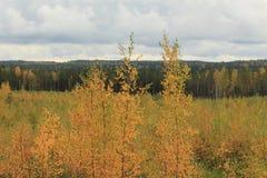 Ung skog Royaltyfria Bilder