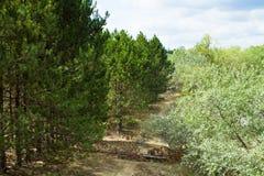 Ung skog Arkivbilder