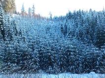 Ung skog Arkivbild