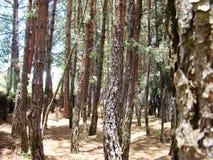 Ung skog Arkivfoto