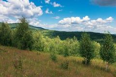 Ung skog på den gräs- kullen royaltyfri foto