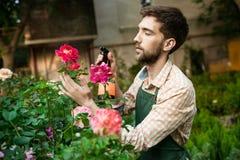 Ung stilig gladlynt trädgårdsmästare som ler, bevattna som tar omsorg av blommor Royaltyfria Foton