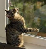 Ung stilig strimmig kattkatt hemma Arkivfoton