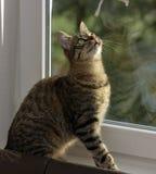 Ung stilig strimmig kattkatt hemma Royaltyfri Bild