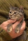 Ung strimmig kattkatt arkivfoto