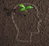 Ung tillväxt av idén inom av det mänskliga huvudet på jordbegrepp Arkivfoton