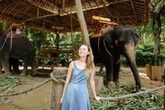Ung trevlig flicka som står nära tämjde och bundna elefanter fotografering för bildbyråer