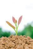 ung växt för ํ Arkivfoton