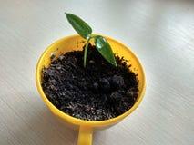 Ung växt för vårgräsplan arkivfoto