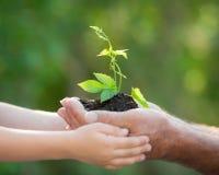 Ung växt i händer mot grön bakgrund arkivfoto