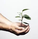 Ung växt i mänskliga händer Royaltyfri Fotografi