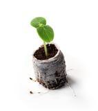Ung växt i påse Fotografering för Bildbyråer