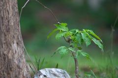 Ung växt i skog på naturbakgrund royaltyfri foto