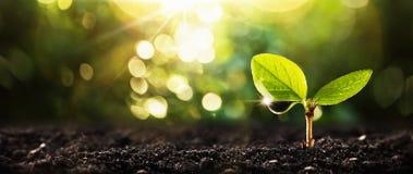 Ung växt i solljus royaltyfria foton