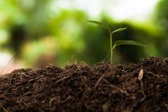 Ung växt i trädgården, växa för växt Fotografering för Bildbyråer