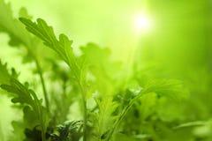 Ung växt på abstrakt suddig grön bakgrund med morgonen su Arkivbilder
