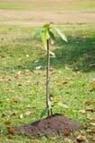 Ung växt på högen av jord Arkivfoton