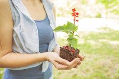 Ung växt som är klar för planta royaltyfri bild