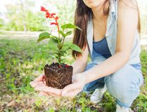 Ung växt som är klar för planta arkivfoton