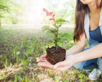 Ung växt som är klar för planta arkivbilder