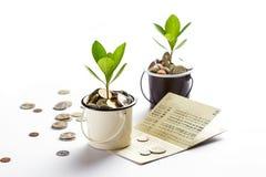 Ung växt som växer i exponeringsglaskrus av myntkontobankbok, sparande pengar, investering och finansiellt arkivbild