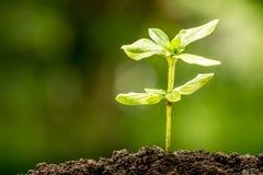 Ung växt som växer i jord Royaltyfria Foton