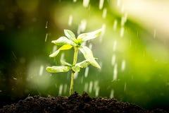 Ung växt som växer i jord på vattendroppe Arkivbild