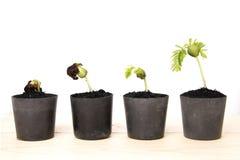 Ung växt som växer i lerakruka Arkivbild