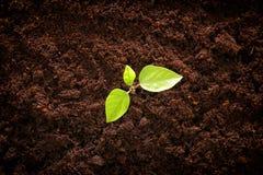 ung växt som växer i ny jordning nytt start- och ekologibegrepp Arkivfoto