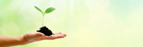 Ung växt som växer i solljus Hand med jord och växten arkivfoton