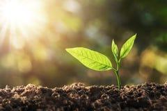 ung växt som växer med solljus arkivfoto