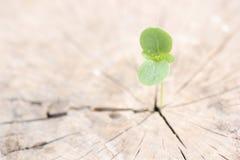 Ung växt som växer på trädstubbe, Royaltyfri Bild