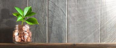 Ung växt som växer ut ur myntkruset på hylla med träbakgrund och solljus - finansiell tillväxt/investerar begrepp arkivfoto