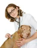 Ung veterinär som kontrollerar hjärtahastigheten av en vuxen sharpeihund Arkivbild