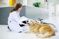 Ung veterinär på sjukhuset Royaltyfria Bilder