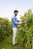 Ung vingårdägare Royaltyfri Fotografi