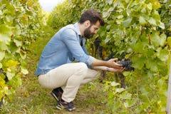 Ung vingårdägare Arkivbilder