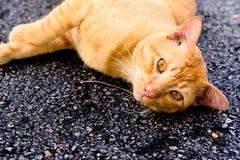 Ung vit katt Fotografering för Bildbyråer