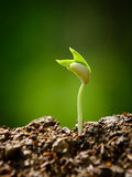 Ung växt, planta, grodd som växer Arkivbild