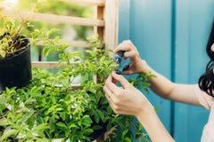 Ung yrkesmässig kvinna i nagelsax för buske för förklädesnittgräsplan i Royaltyfri Bild