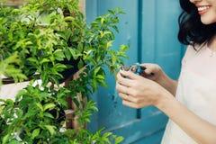 Ung yrkesmässig kvinna i nagelsax för buske för förklädesnittgräsplan i Royaltyfria Foton
